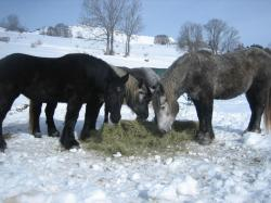 chevaux-22-mars-2013-001.jpg